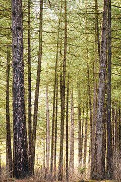 Bos - staand van Dennis Kuzee