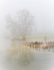 een mistige ochtend langs de rivier van