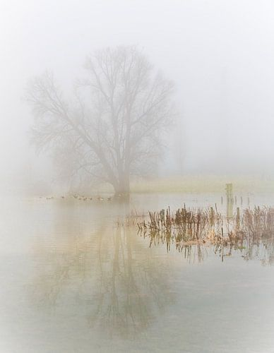een mistige ochtend langs de rivier