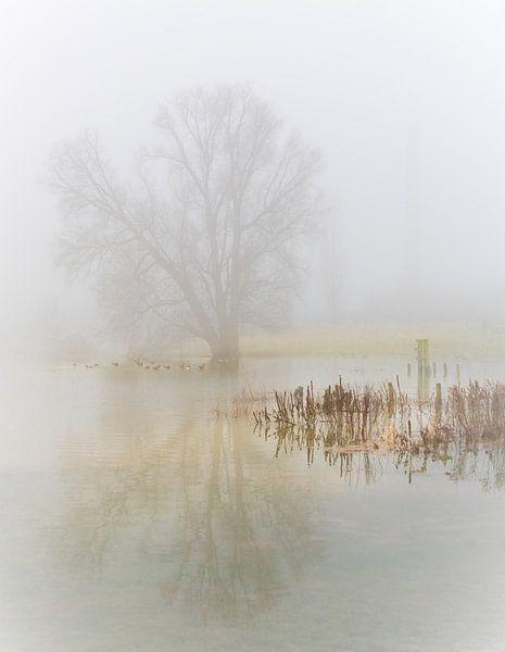 een mistige ochtend langs de rivier van Gerard Wielenga