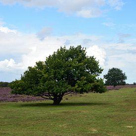 Bomen, gras en heide van Gerard de Zwaan