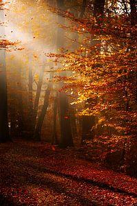 Herbststimmung im Morgenlicht van