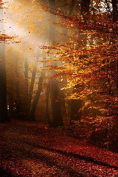 Herbststimmung im Morgenlicht van Kurt Krause