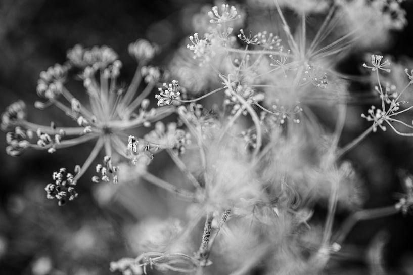 Close up van dille in zwart wit - fotoprint van Manja Herrebrugh - Outdoor by Manja