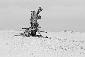 Dode boom op de veluwe van Ronald Smits