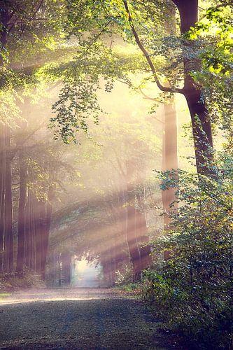 Het lichtend pad van