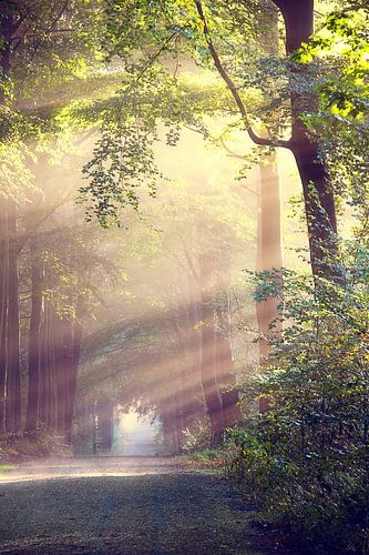 Het lichtend pad sur