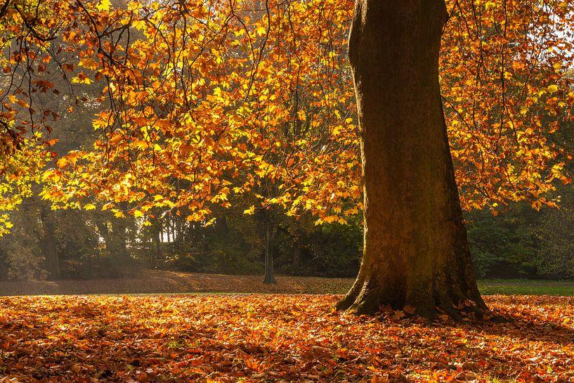 Herfst in Rotterdam van Ilya Korzelius