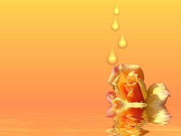 Rose im Regen von Martina Fornal