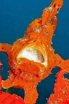 Oranje hengelaars vis.