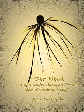 Afgunst en jaloezie van Christine Nöhmeier
