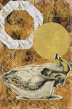 Schädel einer Kuh von Jadzia Klimkiewicz