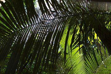 Palmbladeren in het tropisch regenwoud van rene marcel originals