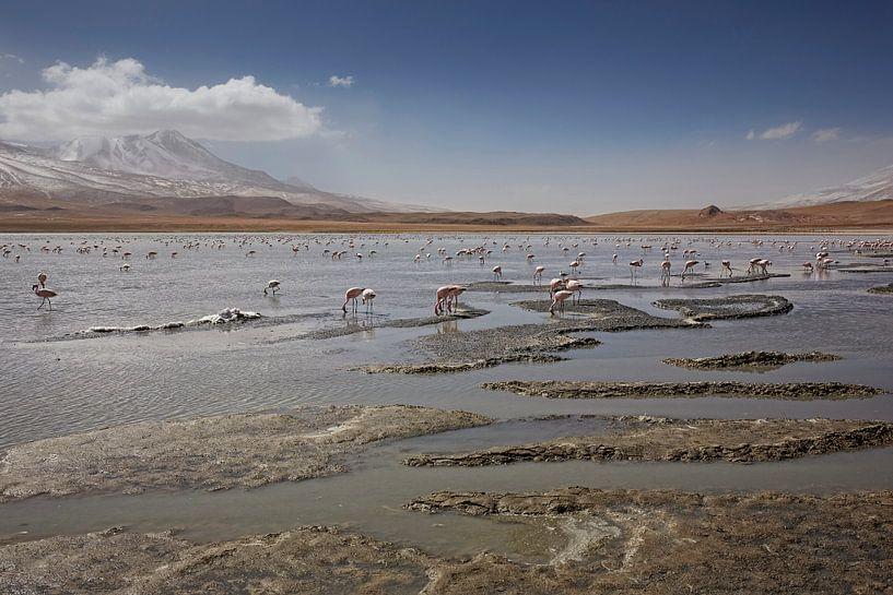 Het Meer Canapa met roze flamengo's, Atacama-woestijn, Bolivia van Tjeerd Kruse