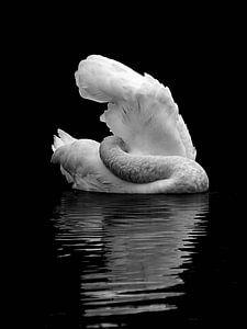 Zwanenmeer bij nacht