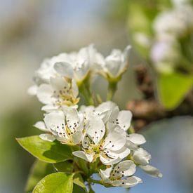 Bloesem in de lente van John van de Gazelle