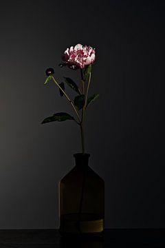 Stilleben mit Blumen - Dark Matter 2 von Geert Smits