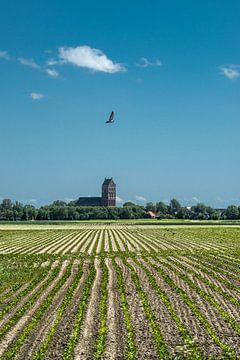 Het kerktorentje van Ferwerd in de voorjaarszon von Harrie Muis