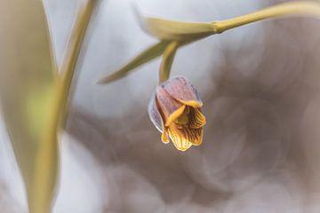 Blumen Teil 87 von Tania Perneel