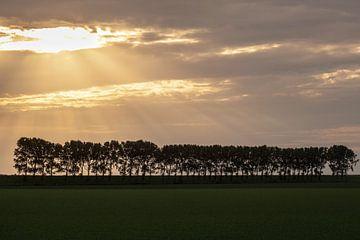 Abendlicht auf einer Reihe von Bäumen von Tot Kijk Fotografie: natuur aan de muur