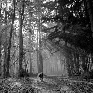 Zonnestralen schijnen door het bos in zwart wit 2