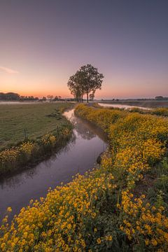 Landschaft im Frühling von Moetwil en van Dijk - Fotografie