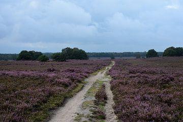 Over de paarse hei van Gerard de Zwaan