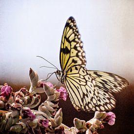 Vlinder bij Vlinders aan de Vliet von Robert van Hall