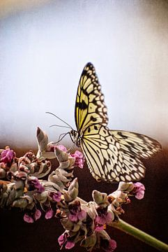 Vlinder bij Vlinders aan de Vliet van Robert van Hall