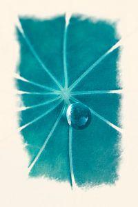 Dauwdruppel op blad