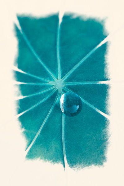 Dauwdruppel op blad van Tot Kijk Fotografie: natuur aan de muur