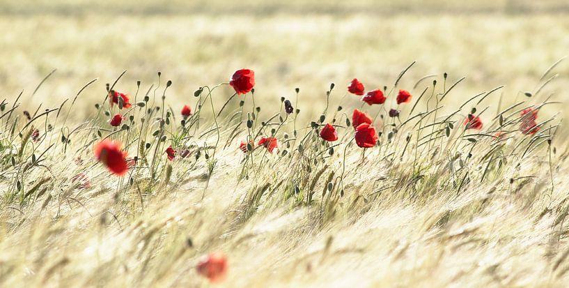A poppy poem von Stephanie Köhl