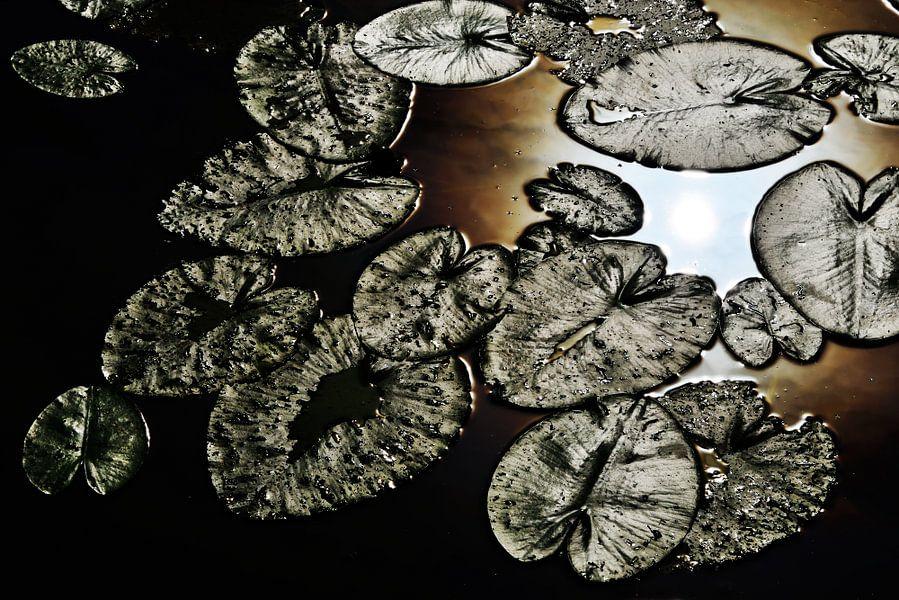 Pompebleden (Nymphaea alba) van Harrie Muis