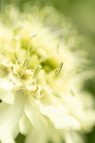Hortus Botanicus | Botanische tuin Leiden | Bloem| Pastel | Lensbaby Art Print
