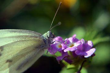 Schmetterling von Nicole Moreaux