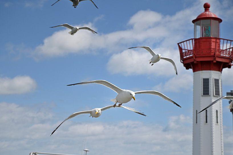 Les mouettes hareng en vol dans le port sur 7Horses Photography