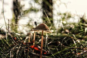 De eenzame paddenstoel
