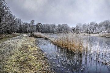 Winter beim Tenellasee von Frans Blok
