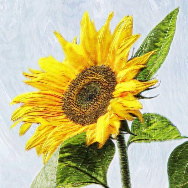 de zonnebloem van Yvonne Blokland
