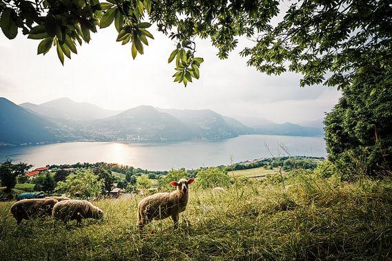 Monte Isola - Lake Iseo (Italy)