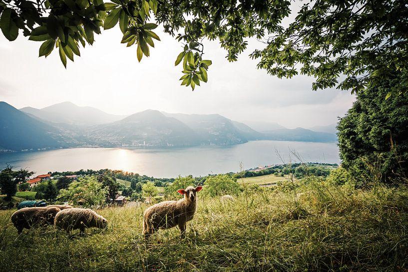 Monte Isola - Lake Iseo (Italy) van Alexander Voss
