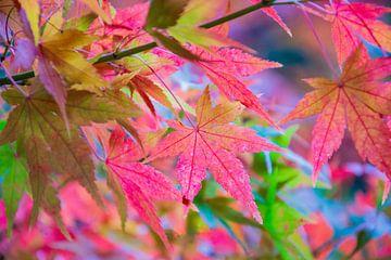 De bladeren van Japan van Alexandra Van den Bossche