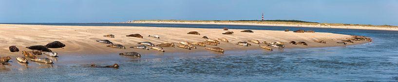 Phoques se reposant sur un banc de sable près d'Ameland sur Frans Lemmens