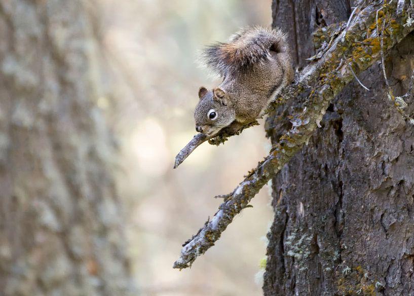Nieuwsgierige eekhoorn van Christa Thieme-Krus