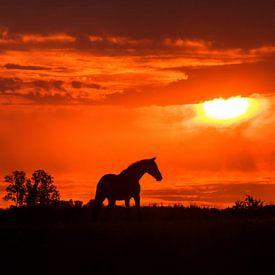 Paardensilhoutte tijdens zonsondergang van Maria-Maaike Dijkstra