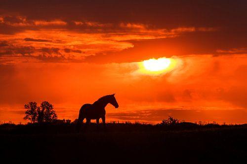 Paardensilhoutte tijdens zonsondergang