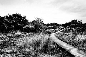 Wandelpad met brug langs het riet van MICHEL WETTSTEIN