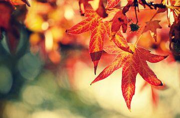 autumnleaves.. sur Els Fonteine