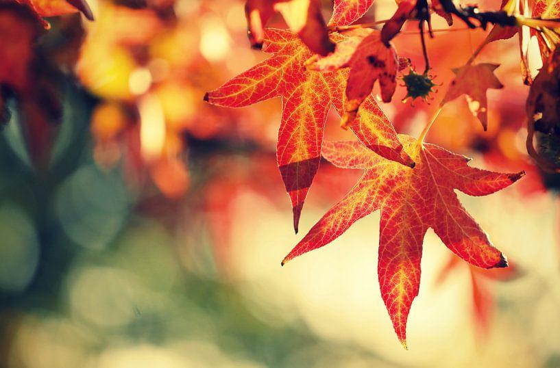autumnleaves.. van Els Fonteine
