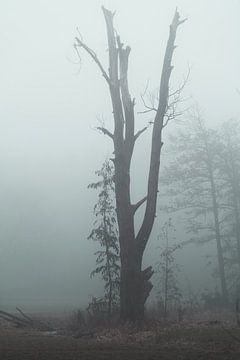 oude boom in mist van Marc-Sven Kirsch
